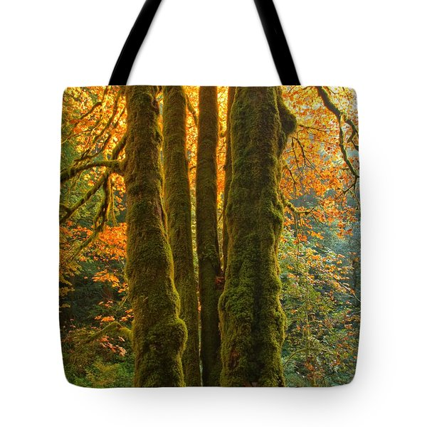 Colors In The Rainforest Tote Bag by Adam Jewell