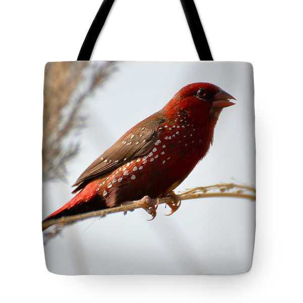 Colour Me Red Tote Bag by Fotosas Photography