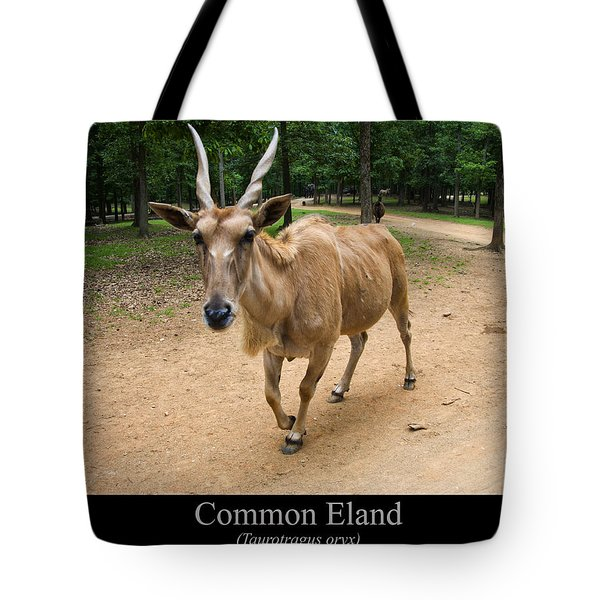 Common Eland Tote Bag by Chris Flees