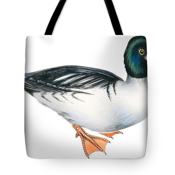 Common Goldeneye  Tote Bag by Anonymous