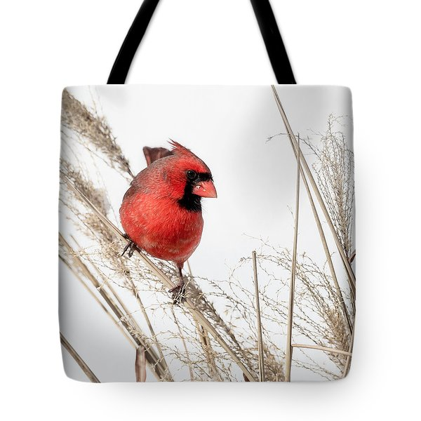 Common Northern Cardinal Square Tote Bag by Bill  Wakeley