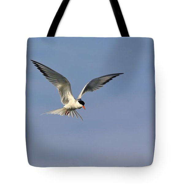 Common Tern Hovering Tote Bag by Tony Beck