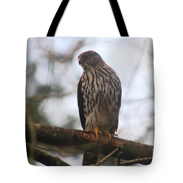 Cooper's  Hawk Dines Here Tote Bag by Kym Backland