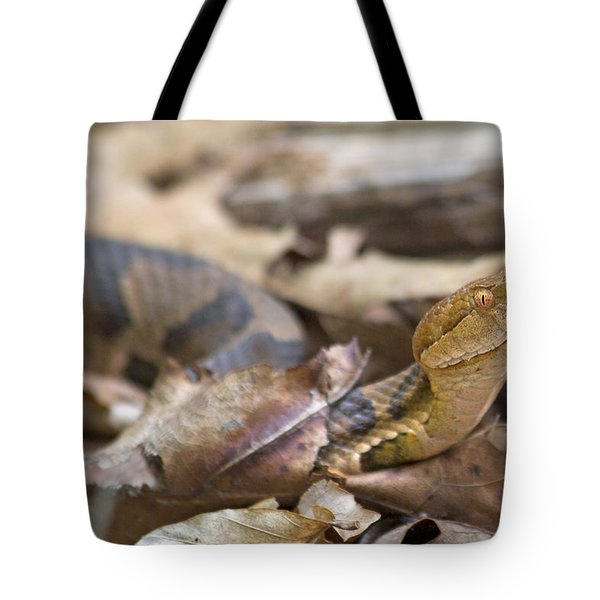 Copperhead In The Wild Tote Bag by Betsy Knapp