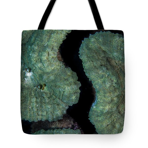 Coral Puzzle Tote Bag by Jean Noren