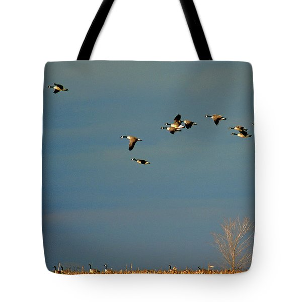 Corn For Breakfast Tote Bag by Skip Willits