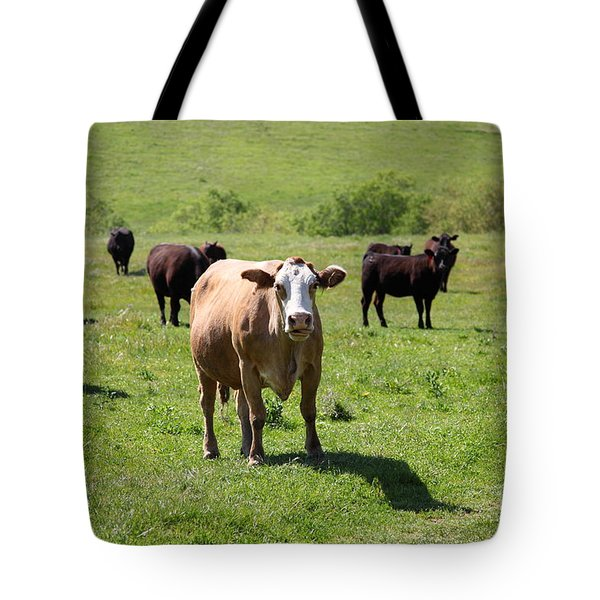 Cows Along The Rolling Hills Landscape of The Black Diamond Mines in Antioch California 5D22341 Tote Bag by Wingsdomain Art and Photography