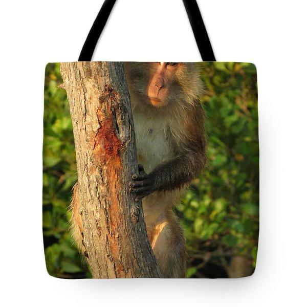 Crab Eating Macaque Tote Bag by Ramona Johnston