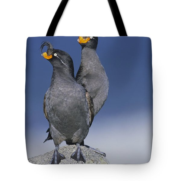 Crested Auklet Pair Tote Bag by Toshiji Fukuda