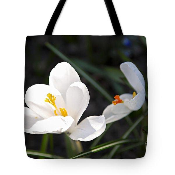 Crocus Flower Basking In Sunlight Tote Bag by Elena Elisseeva