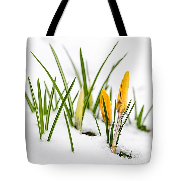 Crocuses in snow Tote Bag by Elena Elisseeva