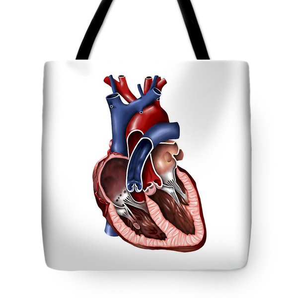 Cross Section Of Human Heart Tote Bag by Stocktrek Images