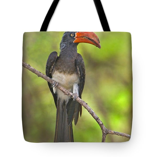 Crowned Hornbill Perching On A Branch Tote Bag by Panoramic Images