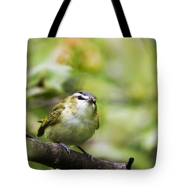 Curious Vireo Tote Bag by Christina Rollo