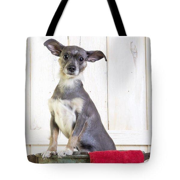 Cute Dog Washtub Tote Bag by Edward Fielding