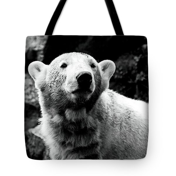 Cute Knut Tote Bag by John Rizzuto