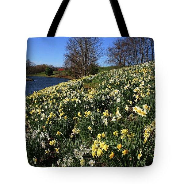 Daffodil Hill Tote Bag by Karol Livote