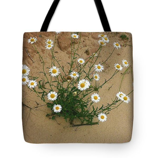 Daisies In The Sand Tote Bag by Randy Pollard