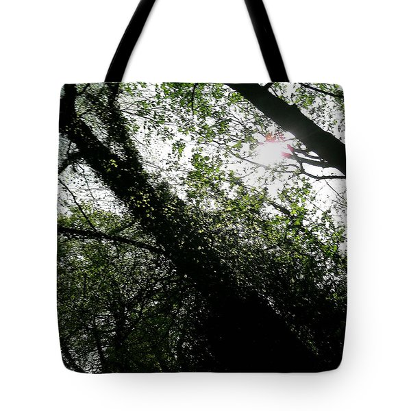 Dappled Forest Tote Bag by Patrick J Murphy