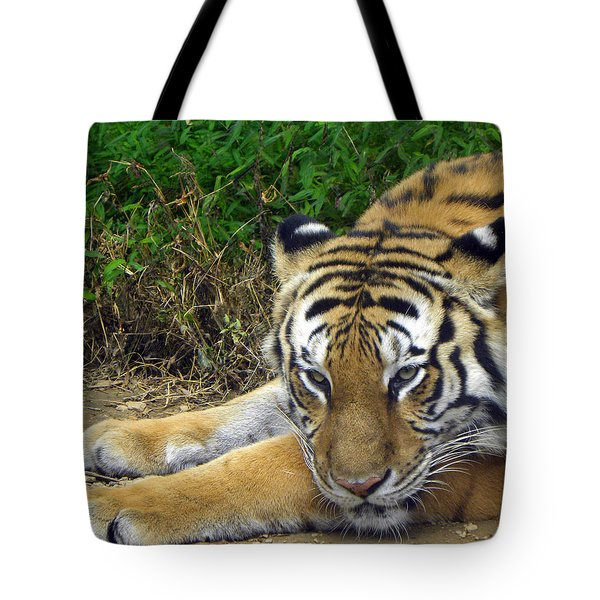 Daydreaming Tote Bag by Sandi OReilly