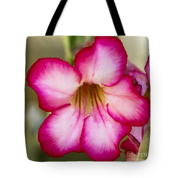 Delicate Desert Rose Tote Bag by Sabrina L Ryan