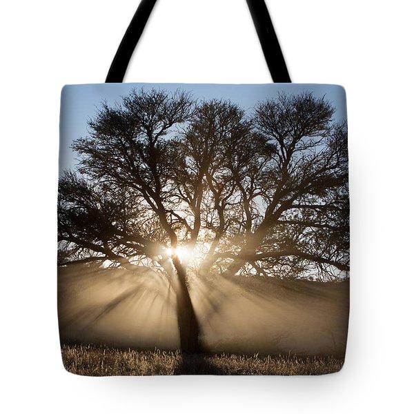 Desert Tree Tote Bag by Max Waugh