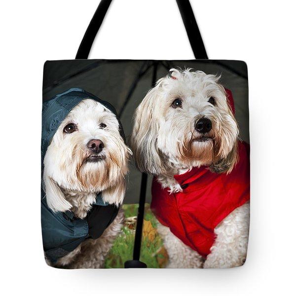 Dogs under umbrella Tote Bag by Elena Elisseeva