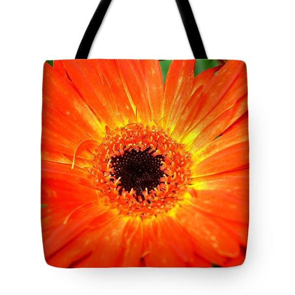 Dsc527d Tote Bag by Kimberlie Gerner
