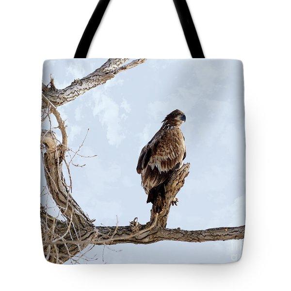 Eagle Eye Tote Bag by Lori Tordsen