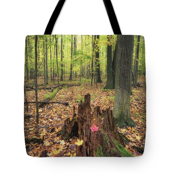 Early Autumn Woods Tote Bag by Michele Steffey
