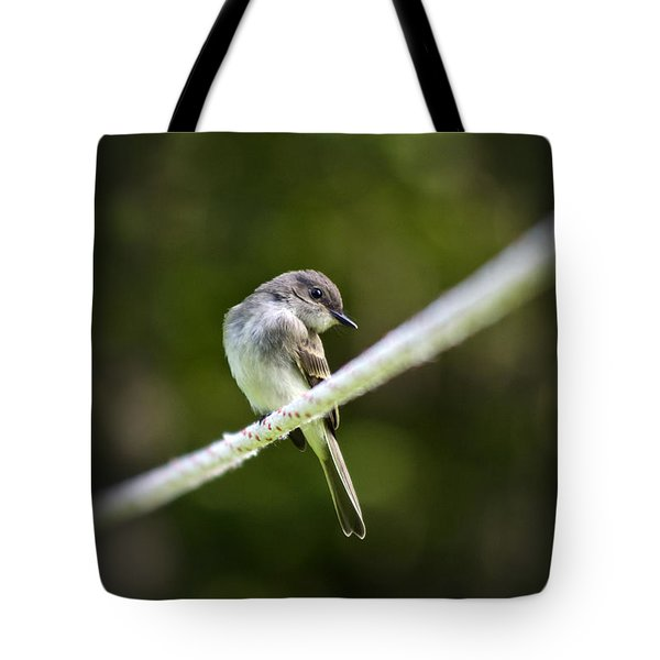 Eastern Phoebe Tote Bag by Christina Rollo