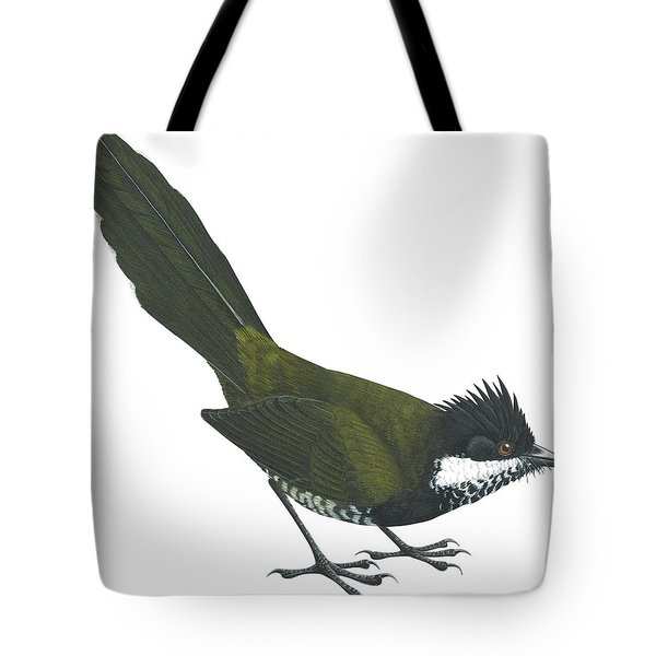 Eastern Whipbird Tote Bag by Anonymous
