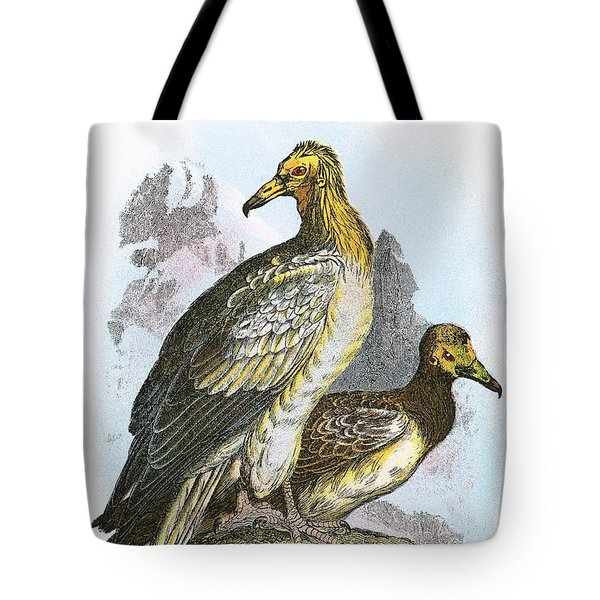 Egyptian Vulture Tote Bag by English School