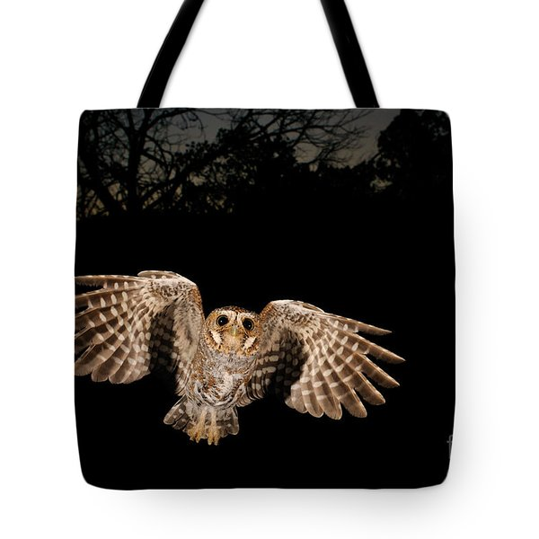 Elf Owl Tote Bag by Scott Linstead