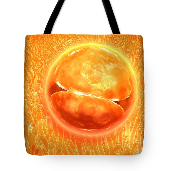 Embryo Development 24-36 Hours Tote Bag by Stocktrek Images