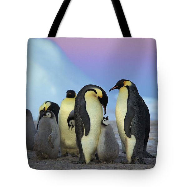 Emperor Penguin Parents And Chick Tote Bag by Frederique Olivier