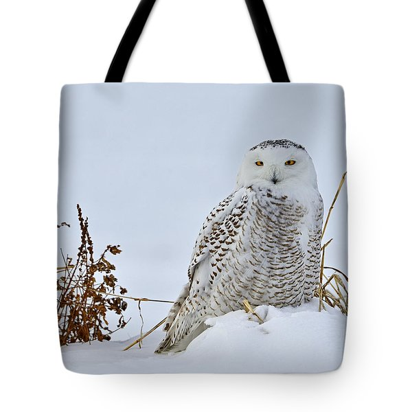Everywhere Tote Bag by Tony Beck