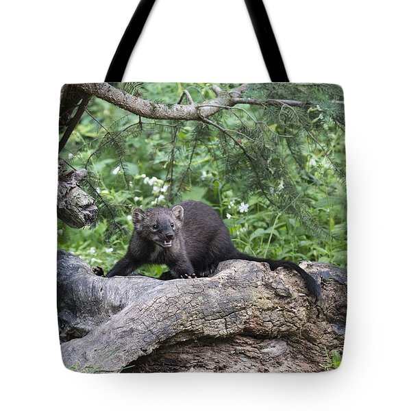 Eyes In The Forest Tote Bag by Sandra Bronstein