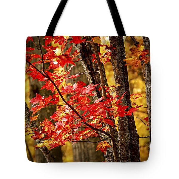 Fall Forest Detail Tote Bag by Elena Elisseeva