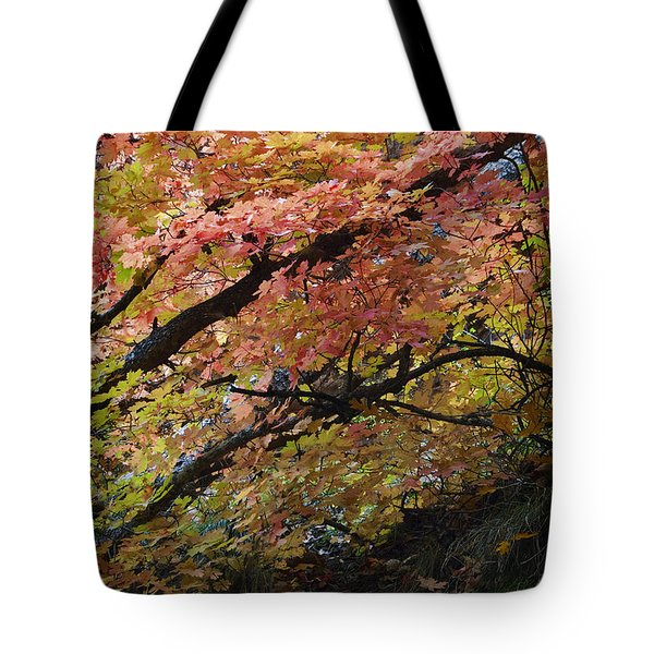 Fall Leaves At West Fork Arizona Tote Bag by Dave Dilli