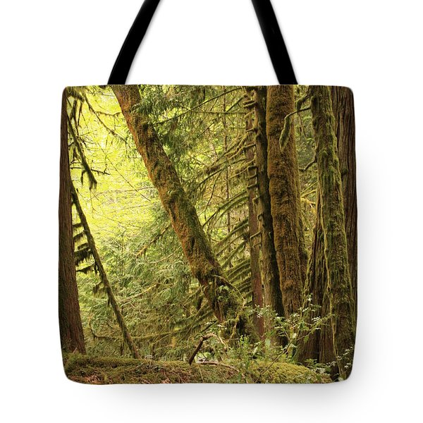 Falling Trees In The Rainforest Tote Bag by Carol Groenen