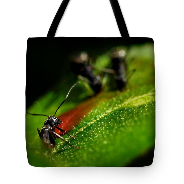 Feeding Black Ants Tote Bag by Michael Eingle