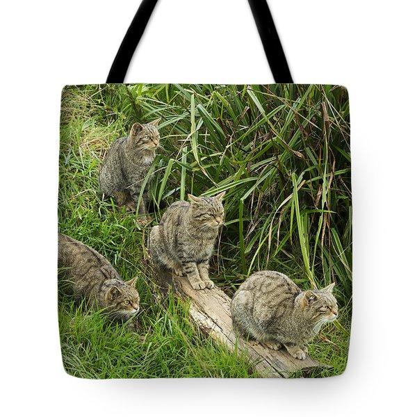 Feeding Time Tote Bag by Louise Heusinkveld