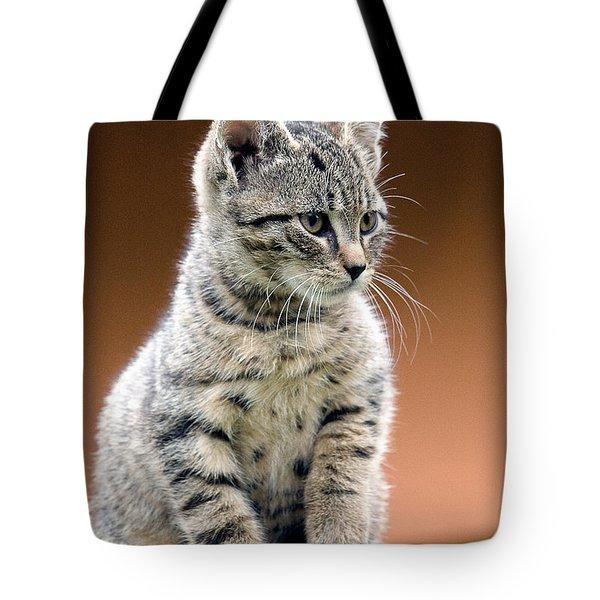 Felix Tote Bag by Davorin Mance