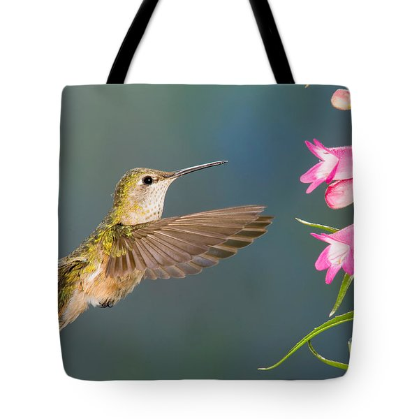 Female Broad-tailed Hummingbirds Tote Bag by Anthony Mercieca