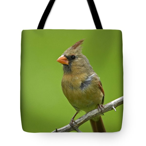 Female Cardinal Tote Bag by Claudio Bacinello