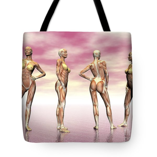 Female Muscular System From Four Points Tote Bag by Elena Duvernay