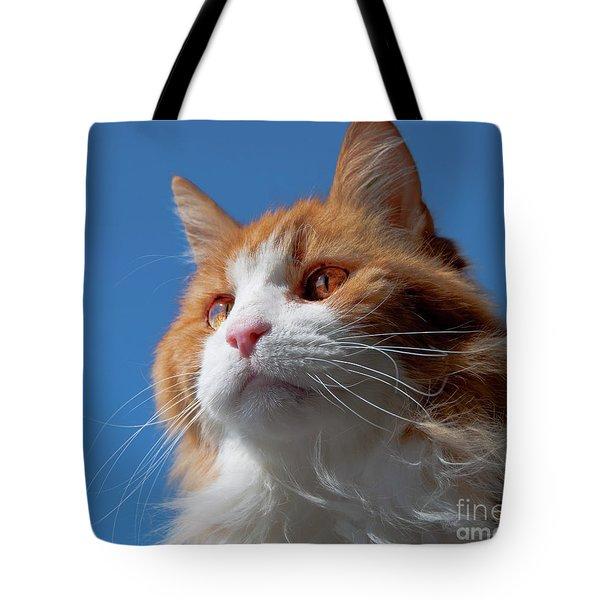 Festus... Tote Bag by Nina Stavlund