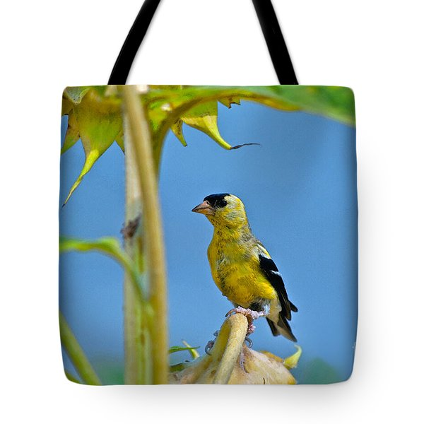Finch Finale Tote Bag by Gwyn Newcombe