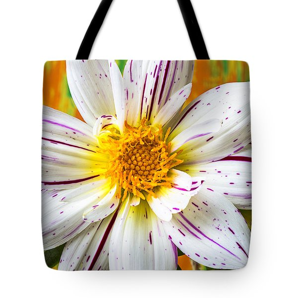 Fireworks Dahlia White And Pink Tote Bag by Garry Gay